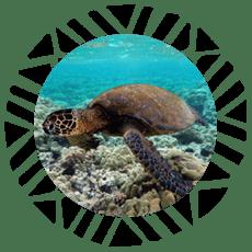 Tortuga Fiji