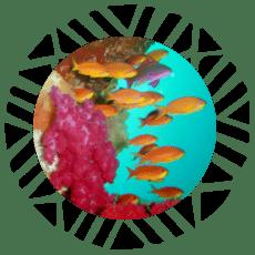 boton buceo rainbow