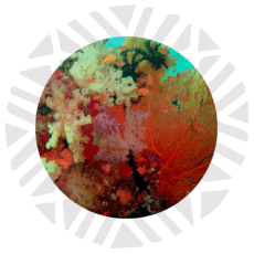 boton-buceo-blight