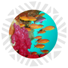 guia de buceo Fiji básica