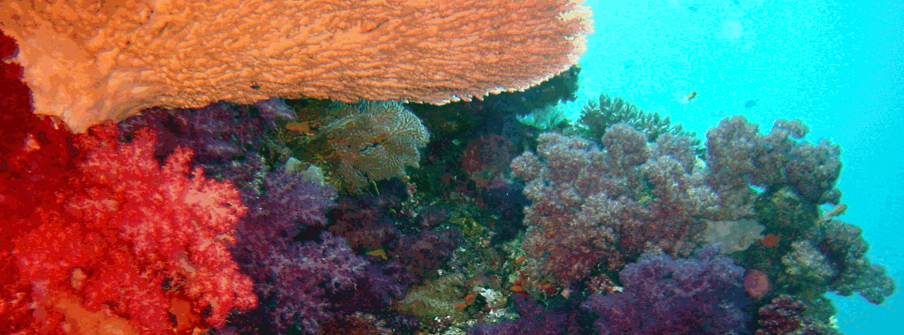 foto-buceo-kadavu