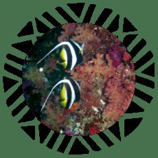 boton-buceo-koro