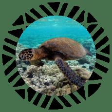 guia buceo Fiji avanzada