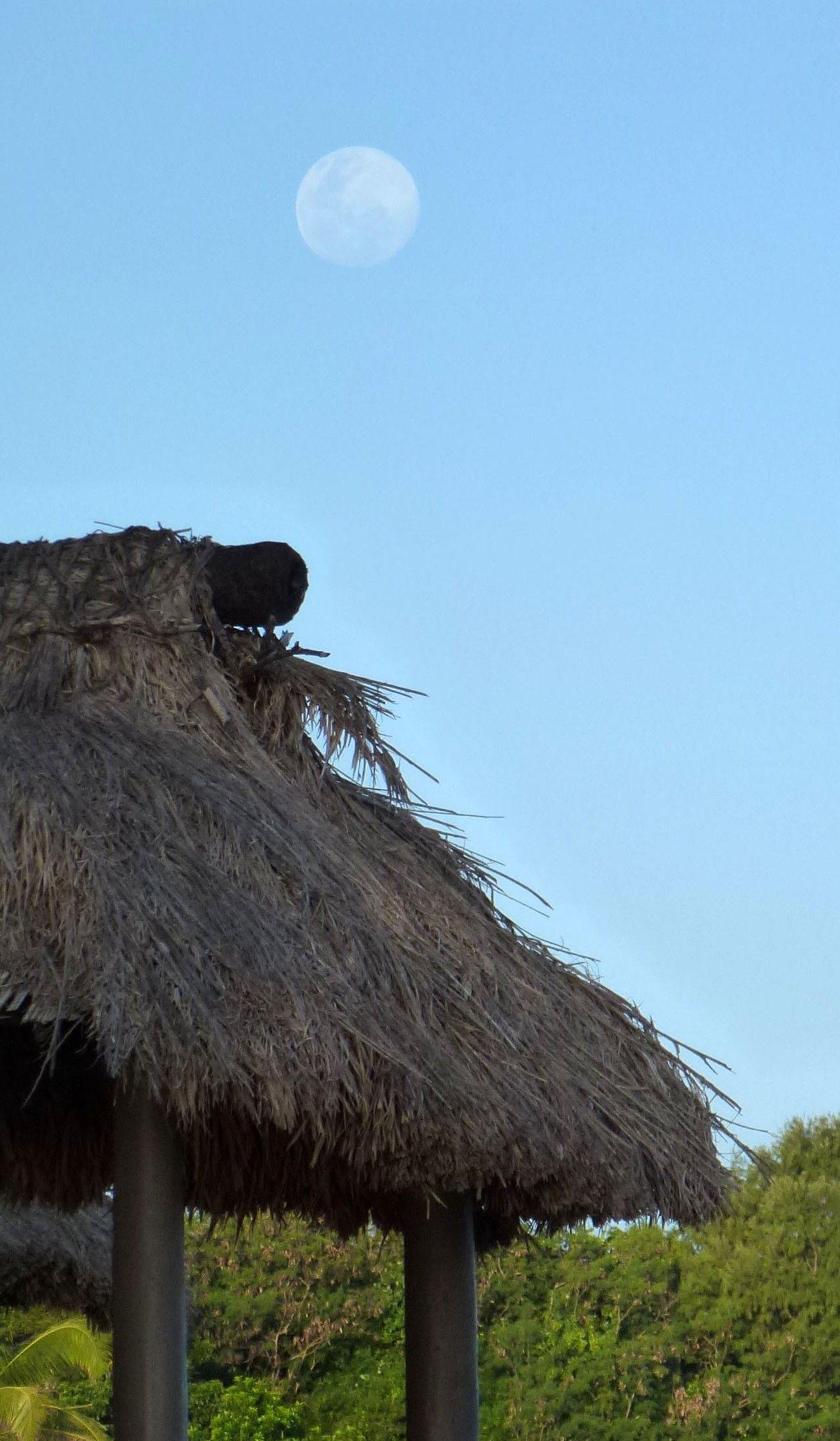 2014 07 11 Fiji Natadola (8.0)